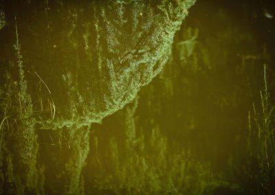 """BOIS - 青松在东园 (qīngsōngzàidōngyuán): """" Dans le jardin à l'est, il y a un pin vert… """" –          """" In the Eastern garden, there is a green pine…"""", Bernard Neau"""