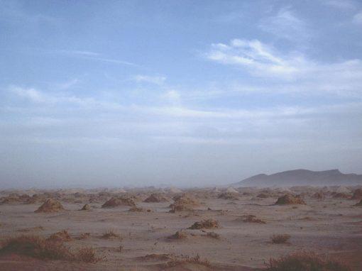 Sahara – Alger (1981-2003)