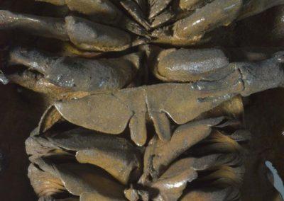Dark Vador - Limulus polyphemus, Limule, Horseshoe crab - Xavier Noël