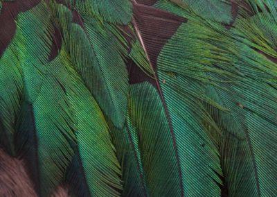 Le Douanier Rousseau, «Douanier» Henri Rousseau - Pharomachrus mocinno, Quetzal resplendissant, Resplendent Quetzal   - Bernard Neau